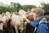 Sweden, Sodermanland, Musko, Close up of cows and farmer