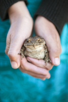 Sweden, Smaland, Hasselo, Woman holding frog in hands
