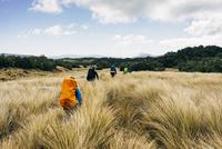 New Zealand, South Island, Kahurangi National Park, Hikers exploring field