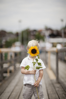 Germany, Bayern, Boy (4-5) holding sunflower