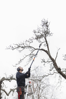 Sweden, Sodermanland, Jarna, Man cutting branch of apple tree