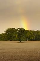 Sweden, Skane, Krageholm, Rainbow over field