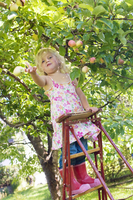 Sweden, Uppland, Hasselby, Young girl (4-5) standing on ladder throwing apple