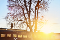 Sweden, Vastra Gotaland, Sandared, Backlit train and bare tree
