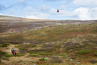 Sweden, Lapland, Levas, Red helicopter flying over meadow full of reindeer (Rangifer tarandus)