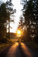Sweden, Ostergotland, Landscape with empty road and setting sun