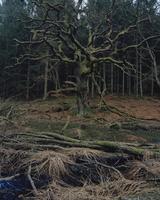 Sweden, Skane, Hackeberga, Dead tree in forest 11090017399| 写真素材・ストックフォト・画像・イラスト素材|アマナイメージズ
