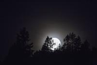 Sweden, Medelpad, Silhouette of forest at night 11090017459| 写真素材・ストックフォト・画像・イラスト素材|アマナイメージズ