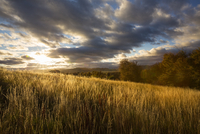 Australia, Tasmania, Mole Creek, Field under cloudy sky at sunset