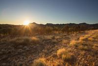 Australia, Northern Territory, Alice Springs, Field at sunset 11090018673| 写真素材・ストックフォト・画像・イラスト素材|アマナイメージズ