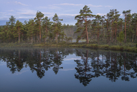 Sweden, Narke, Scenic view of lake by forest 11090019436| 写真素材・ストックフォト・画像・イラスト素材|アマナイメージズ