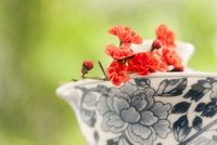 A cup of Chinese tea with decorative wintersweet flower