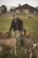 Farmer working and tending to the animals on an organic farm 11093000620| 写真素材・ストックフォト・画像・イラスト素材|アマナイメージズ