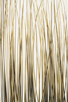 Detail of ornamental grasses on white background 11093000707| 写真素材・ストックフォト・画像・イラスト素材|アマナイメージズ