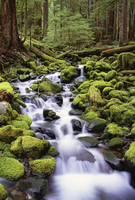 A stream flowing over mossy rocks in Olympic National Park