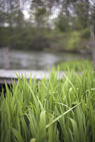 lush grass by a lake or stream, in the countryside. 11093000832| 写真素材・ストックフォト・画像・イラスト素材|アマナイメージズ