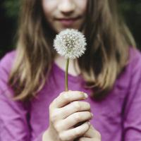 A ten year old girl holding a dandelion clock seedhead.  11093001007| 写真素材・ストックフォト・画像・イラスト素材|アマナイメージズ