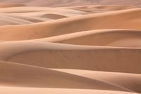 Namib Desert, Namibia 11093001869| 写真素材・ストックフォト・画像・イラスト素材|アマナイメージズ