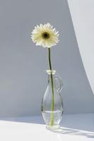 A vase holding a single white gerbera flower.