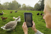 Woman holding a digital tablet, taking a photograph of geese and chicken in her chicken run. 11093004546| 写真素材・ストックフォト・画像・イラスト素材|アマナイメージズ