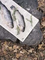 Two fresh fish lying on a tree trunk. 11093004678| 写真素材・ストックフォト・画像・イラスト素材|アマナイメージズ
