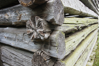 Close up of a log cabin in the Great Smoky Mountains in Tennessee. 11093005787| 写真素材・ストックフォト・画像・イラスト素材|アマナイメージズ