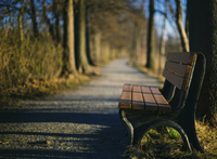 Bench on the side of a path lined with trees.