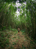 Rear view of a woman walking through a bamboo forest. 11093009136| 写真素材・ストックフォト・画像・イラスト素材|アマナイメージズ