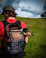 Rear view of a man carrying a Jack Russell dog in a backpack.