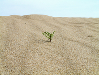 Young plant growing in the sand in a desert.