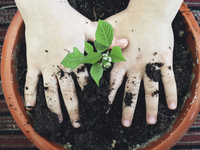 Close up of a person planting seedlings in a flower pot.