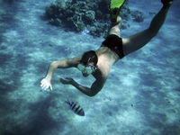 Man wearing swimming trunks, goggles and flippers diving in the Red Sea.