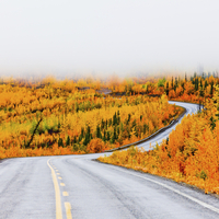 North Klondike Highway winding through autumn gold coloured boreal forest taiga countryside with low cloud cover, Yukon Territor