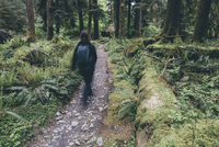 Female hiker walking on a trail in temperate rainforest