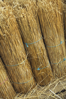 Close up of yelms of straw used for thatching a roof.