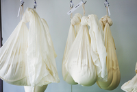 Gauze bags with goats cheese hanging in a creamery.