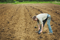 A man bending over planting a seedling in a field. 11093011559| 写真素材・ストックフォト・画像・イラスト素材|アマナイメージズ