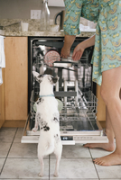 Barefoot woman and white dog standing in front of an open dishwasher in a kitchen.