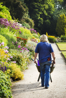 Gardener pushing wheelbarrow at Waterperry Gardens in Oxfordshire. 11093012995  写真素材・ストックフォト・画像・イラスト素材 アマナイメージズ