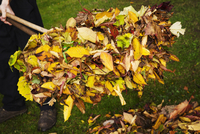 A rake and fallen autumn leaves