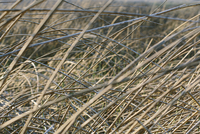 Low angle view of dry grasses in meadow