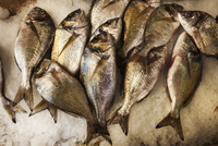 A display of fresh fish on ice on a market stall.