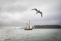 A traditional sailing boat on the waters of the River Fal in the estuary.