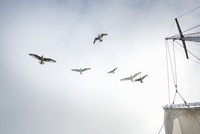 A boat mast and seagulls wheeling above the boat.