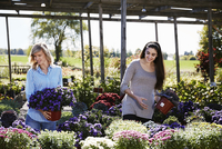 Two women choosing flowering plants at a garden centre.