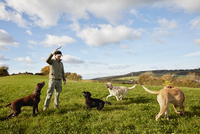 Dog walker, a man with his arm raised to throw a stick for three dogs. 11093014346| 写真素材・ストックフォト・画像・イラスト素材|アマナイメージズ