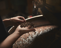 A coffee shop. A person holding a handful of fresh coffee beans.