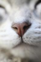 Close-up of a cat's nose. 11093014665| 写真素材・ストックフォト・画像・イラスト素材|アマナイメージズ