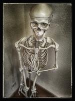 Skeleton, studio