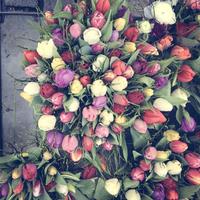 Germany, Baden-Wuerttemberg, Tuebingen, weekly market, tulips 11094000431  写真素材・ストックフォト・画像・イラスト素材 アマナイメージズ